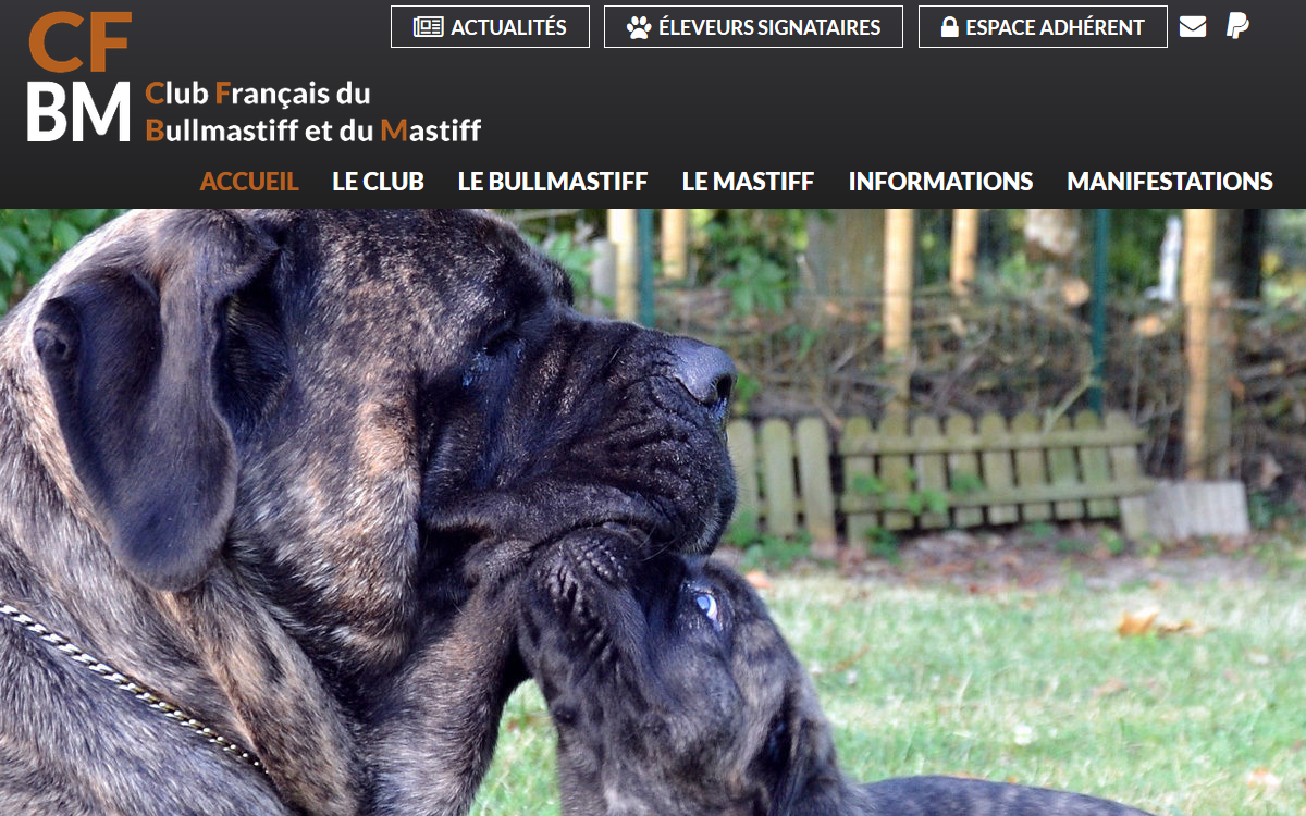 Club Français du Bullmastiff et du Mastiff - Site Officiel